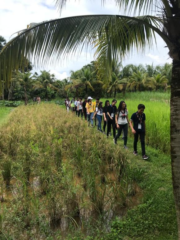 Students walking through paddy field